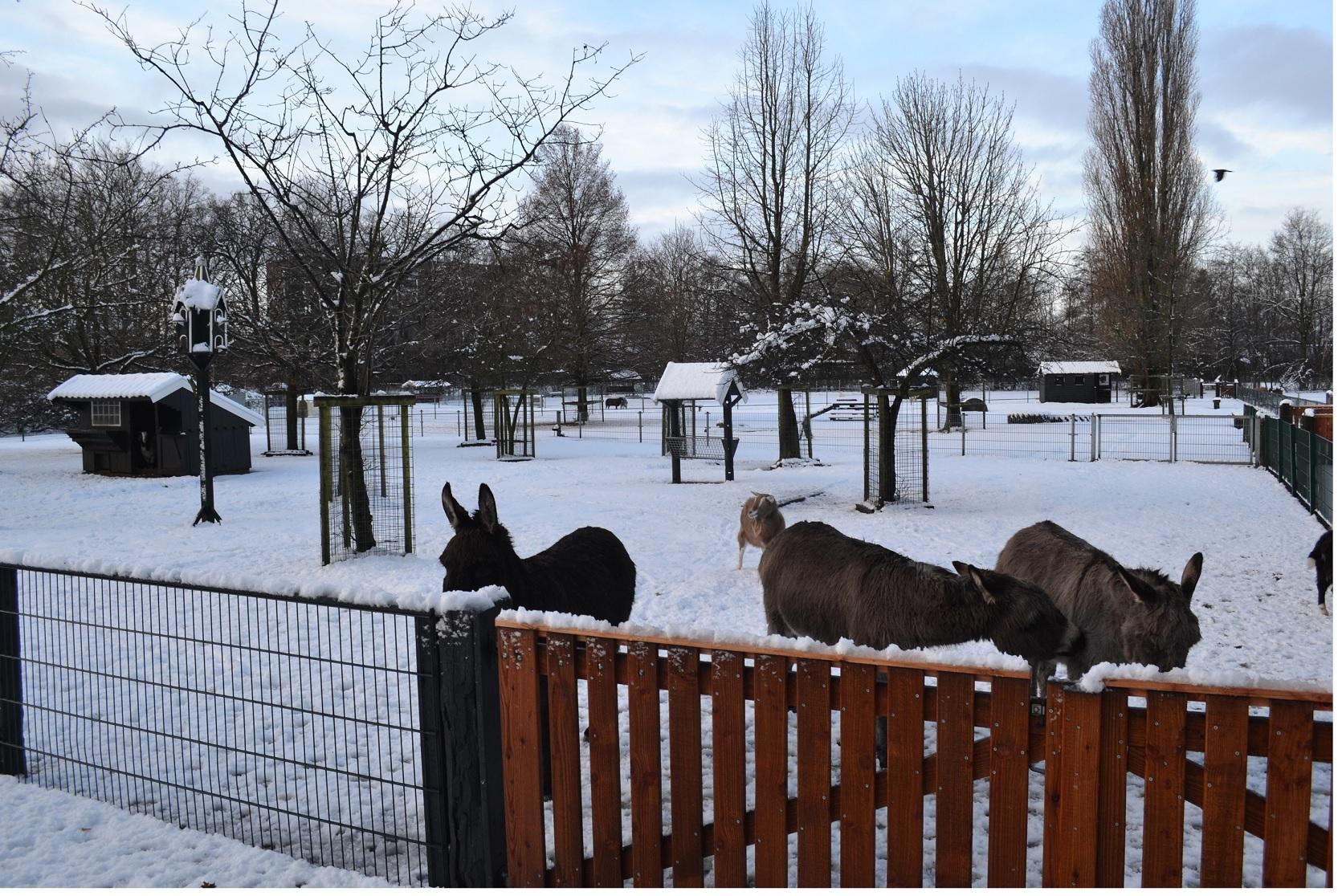 Foto van dieren op kinderboerderij Noord
