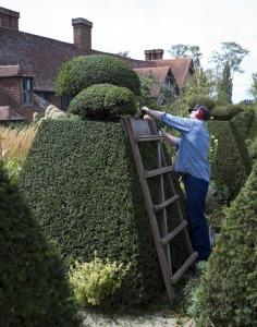 topiary-898927_1280